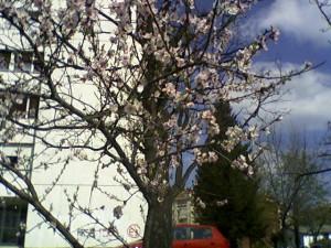 prolećna šetnja