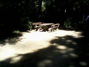 Banjička šuma