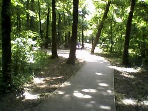 Banjička šuma, staza