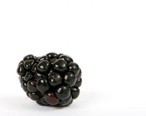 berry-1239101_960_720