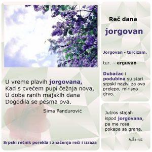 muškatla jorgovan nazivi cveća u srpskom jeziku