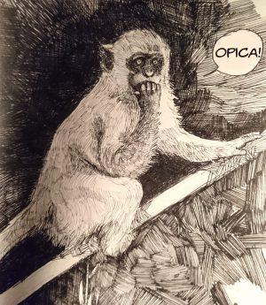 majmun - opica, poreklo reči