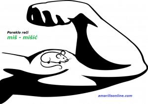 miš-mišić-poreklo-srpske-reči