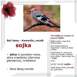 osa sojka stare srpske reči