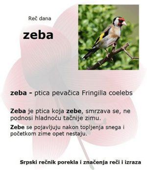 orao zeba poreklo srpskih reči