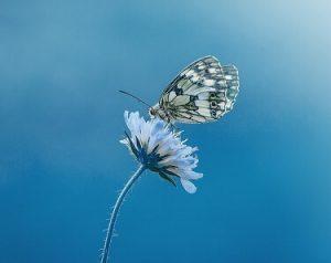 leptir značenje