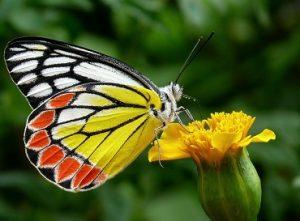 leptir znači
