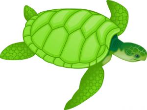 kornjača-poreklo-značenje-reči