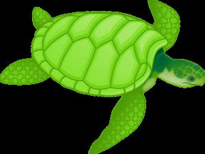 kornjača poreklo i značenje reči