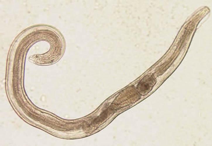 Paraziták znacenje - elmuszolg.hu