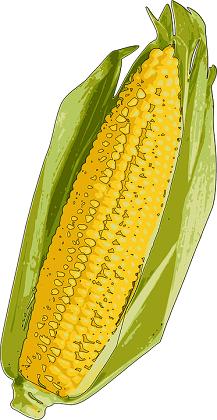 purenjak-kukuruz značenje poreklo