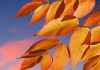 engleski čitanje primeri autumn