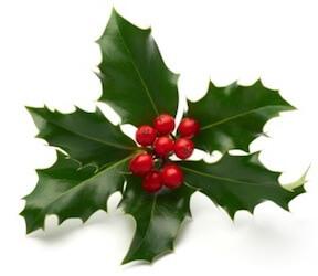 zelenika i božikovina ukras za novu godinu