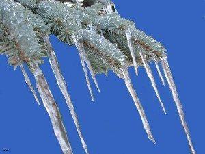 zimske ledenice