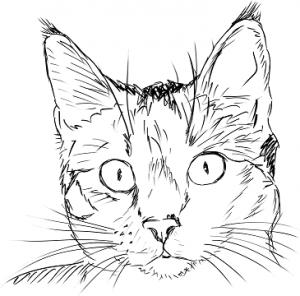kotka mačka