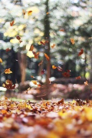 meseci srpski listopad oktobar