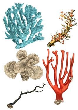 koral značenje poreklo reči