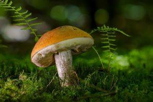 gljiva гљива poreklo značenje reči
